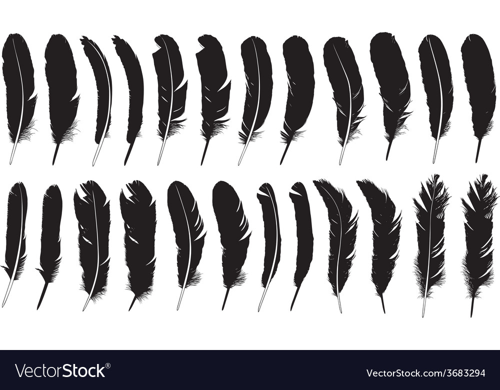 Set of different feathers vector | Price: 1 Credit (USD $1)
