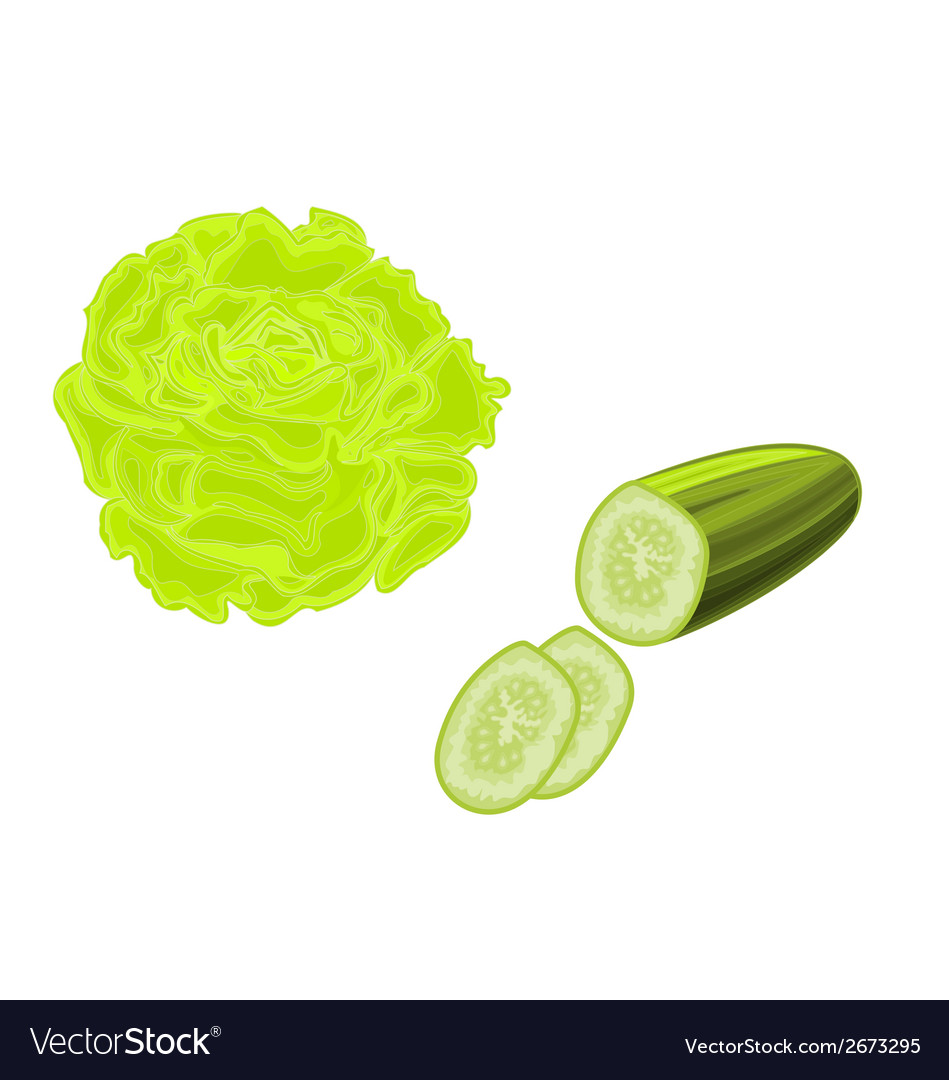 Lettuce-and-cucumber-lettuce and cucumber vector | Price: 1 Credit (USD $1)