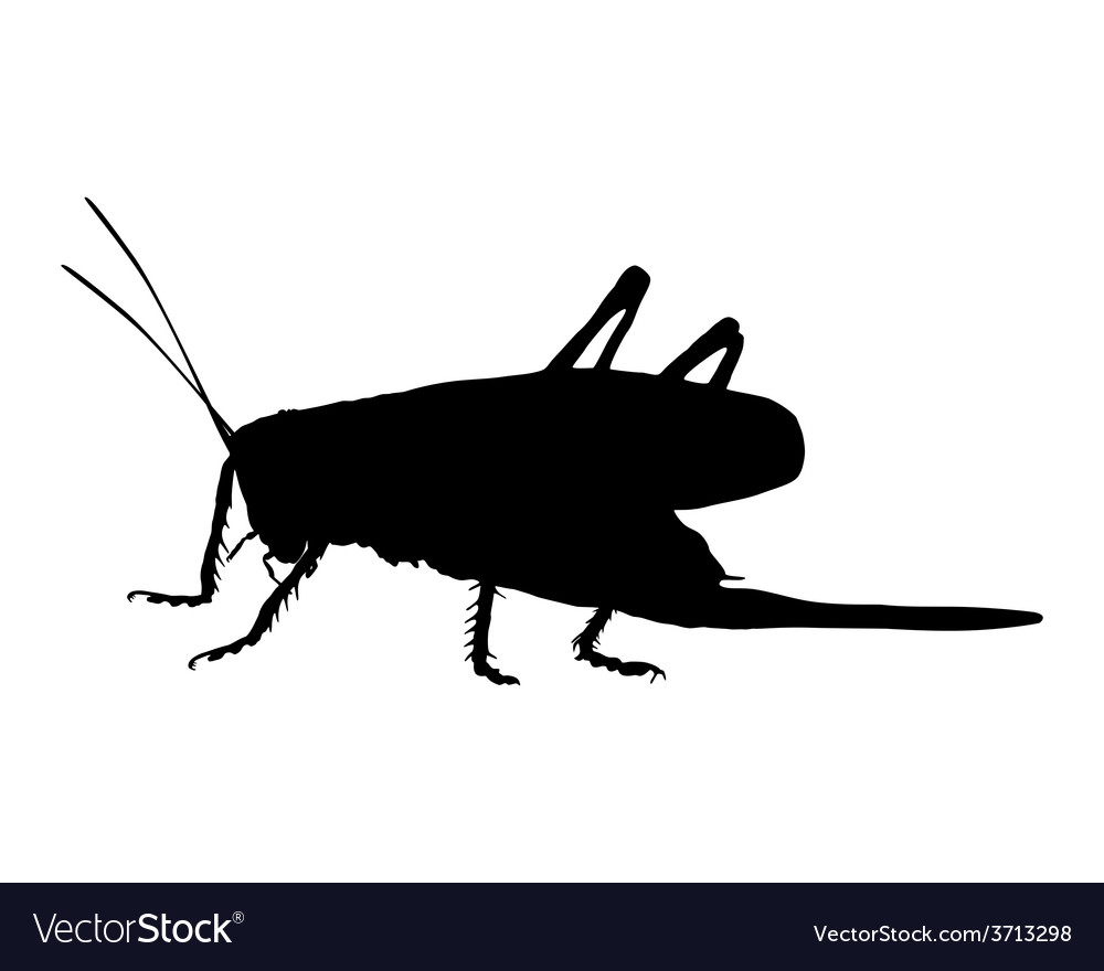 Grasshopper on white vector | Price: 1 Credit (USD $1)