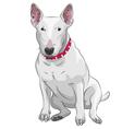 Bull terrier vector