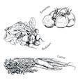 Hand drawn vegetables ink sketches set vector