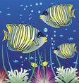Aquarium and colorful fishes vector