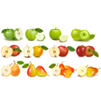 Set of red and green fruits vector
