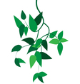 Green branch with leaves vector