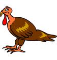Turkey bird vector