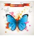 Morpho butterfly vector