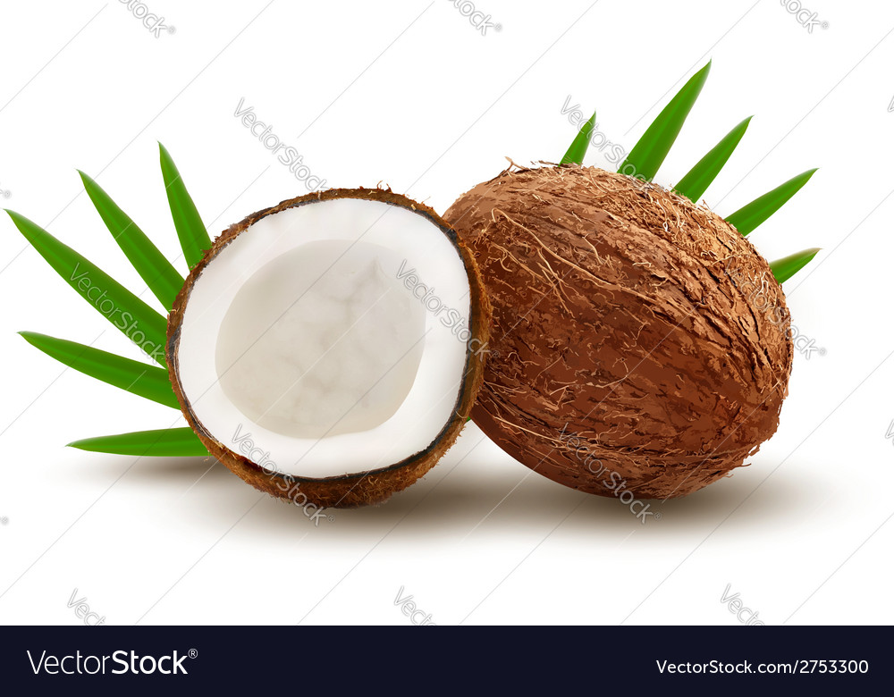 Coconut with leaves vector | Price: 1 Credit (USD $1)