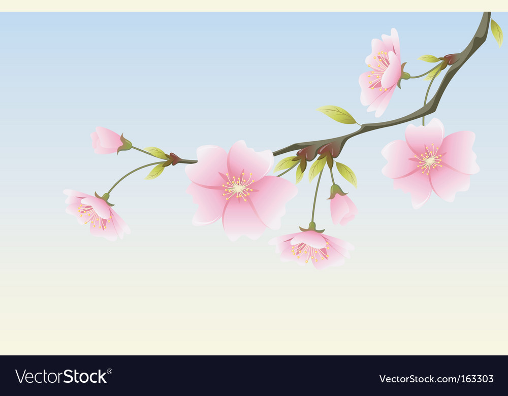 Animi spring sakura vector | Price: 1 Credit (USD $1)