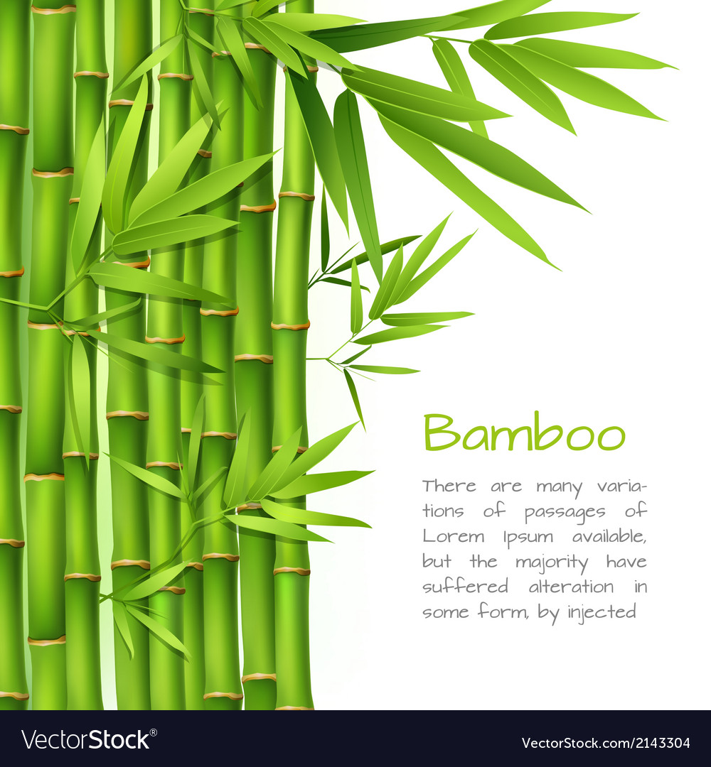 Realistic bamboo background vector | Price: 1 Credit (USD $1)