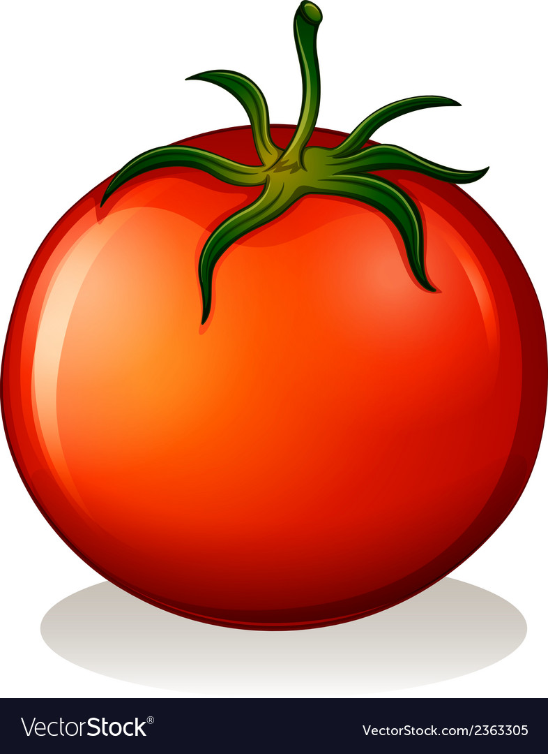 A red tomato vector | Price: 1 Credit (USD $1)