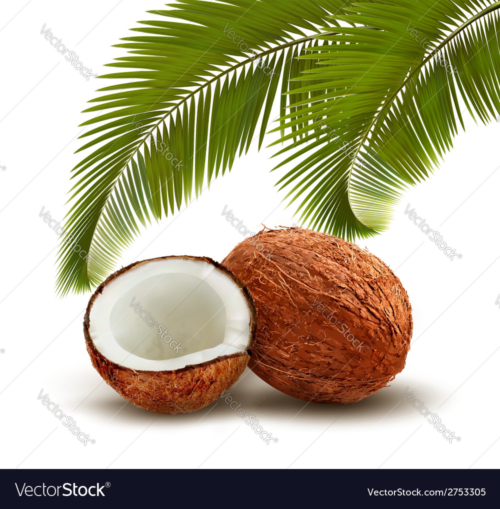 Coconut with palm leaves vector | Price: 1 Credit (USD $1)