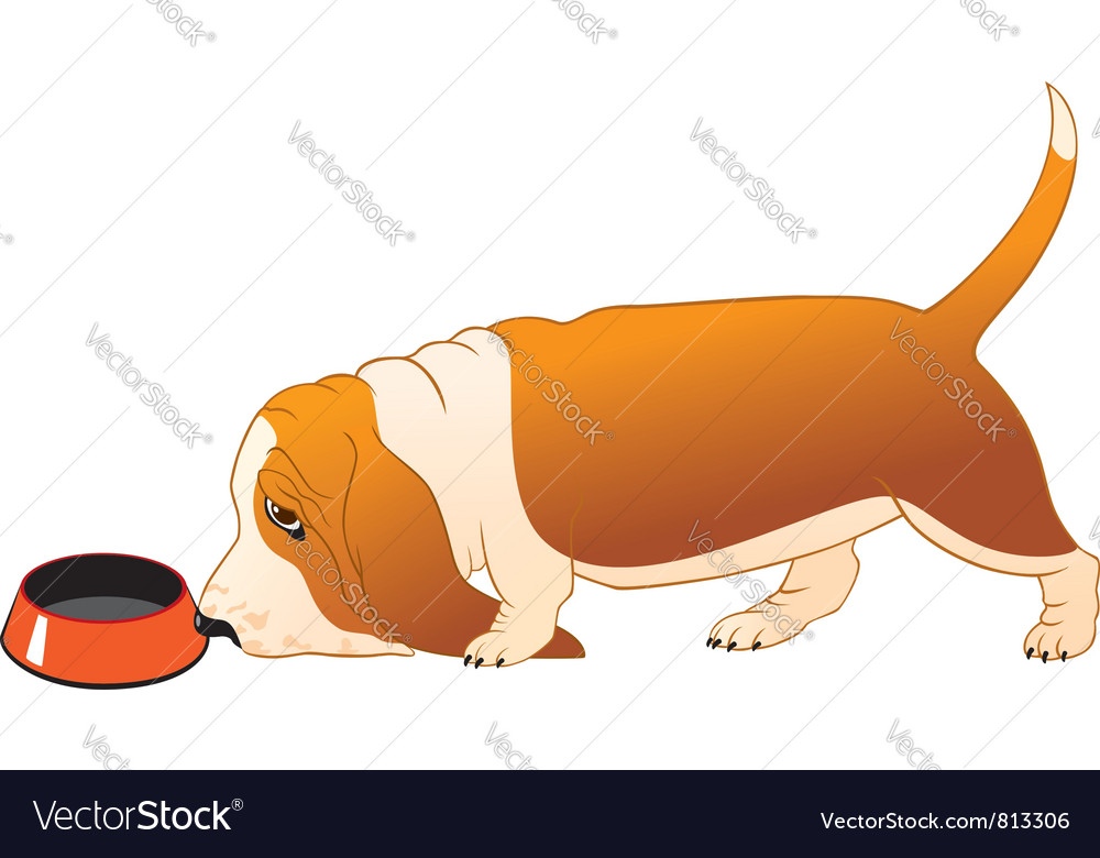 Hungry basset hound vector | Price: 1 Credit (USD $1)