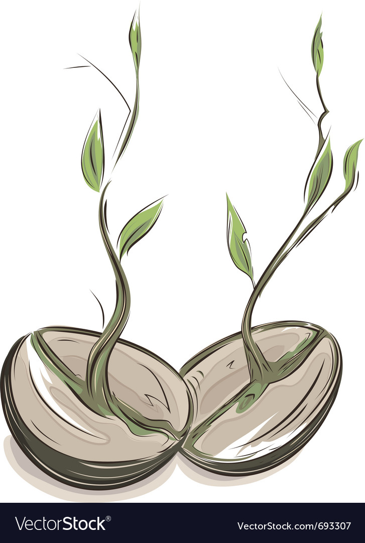 Sprouting beans vector | Price: 1 Credit (USD $1)