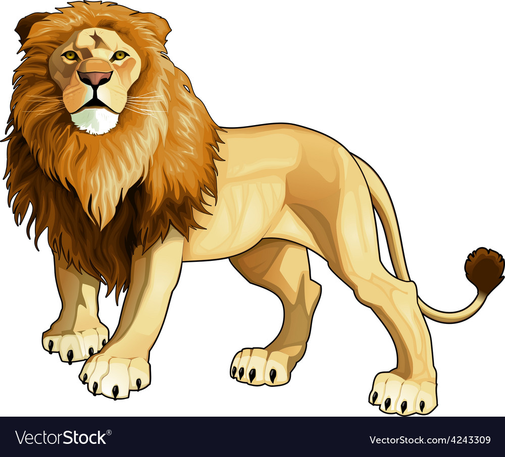 Lion king vector | Price: 1 Credit (USD $1)