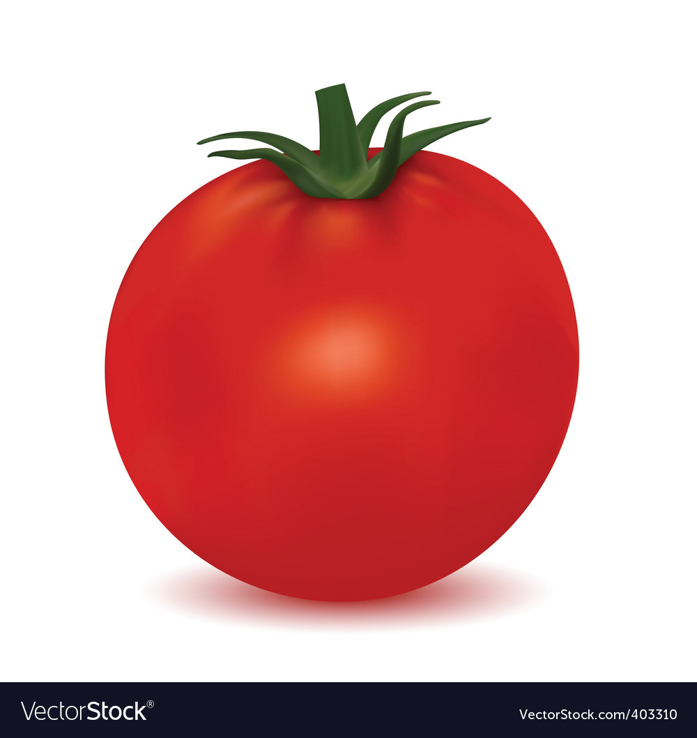 Tomato isolated on white background vector | Price: 1 Credit (USD $1)