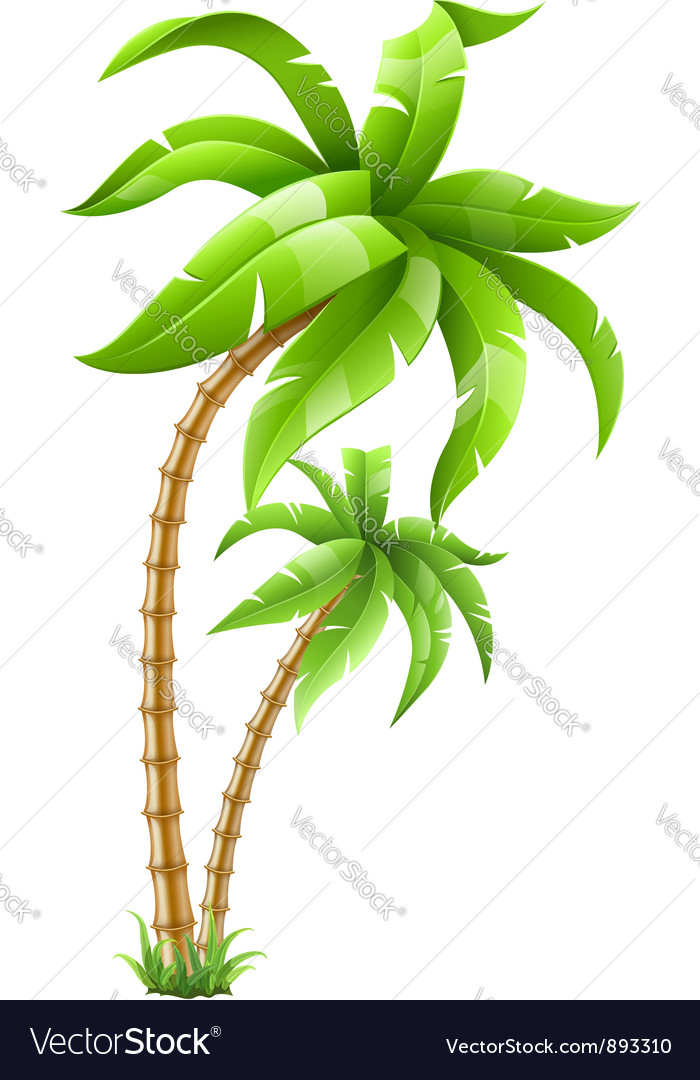 Tropical palm trees vector | Price: 3 Credit (USD $3)