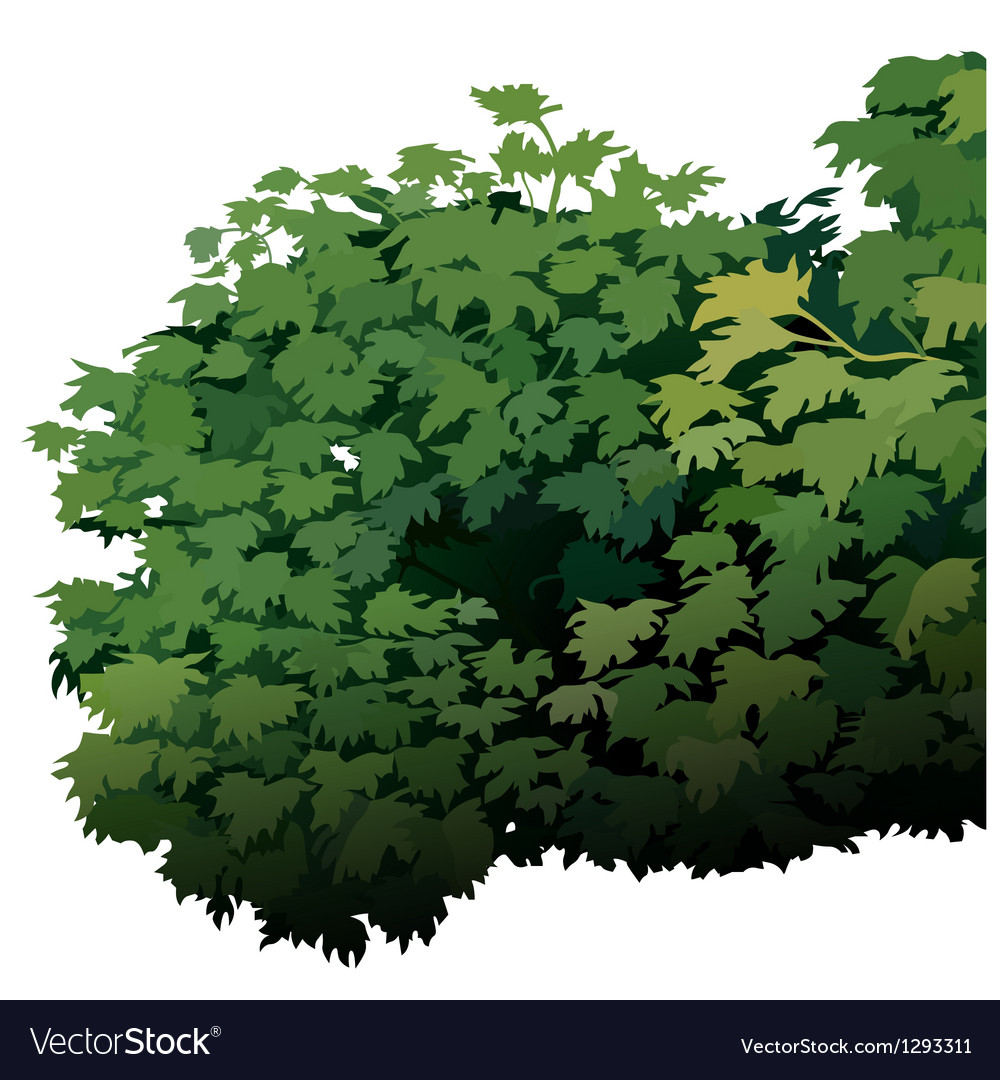 Shrub vector | Price: 1 Credit (USD $1)