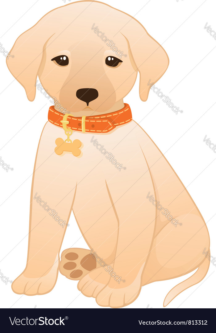 Labrador retriever puppy vector | Price: 1 Credit (USD $1)