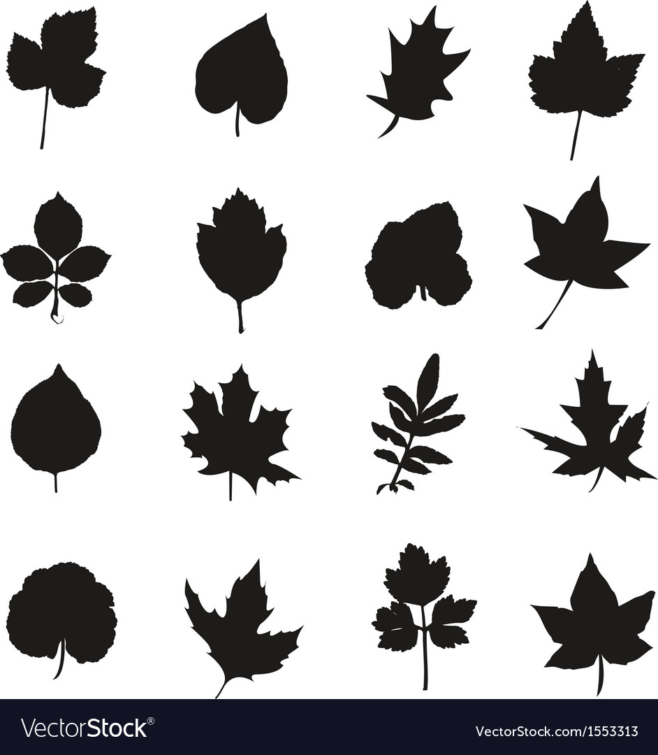 Black leaves vector | Price: 1 Credit (USD $1)