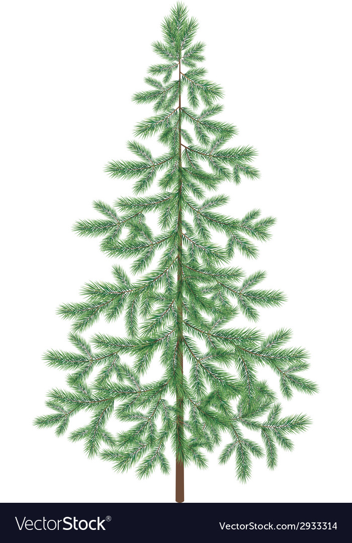Christmas green spruce fir tree isolated vector | Price: 1 Credit (USD $1)