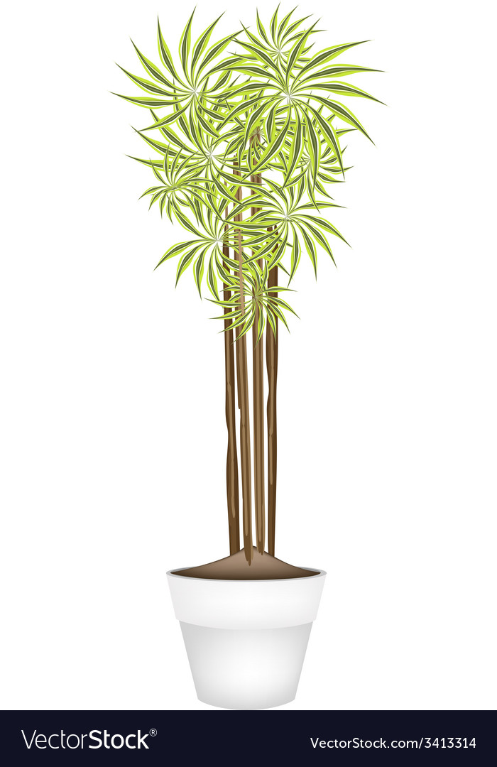 Yucca tree and dracaena plant in ceramic pot vector | Price: 1 Credit (USD $1)