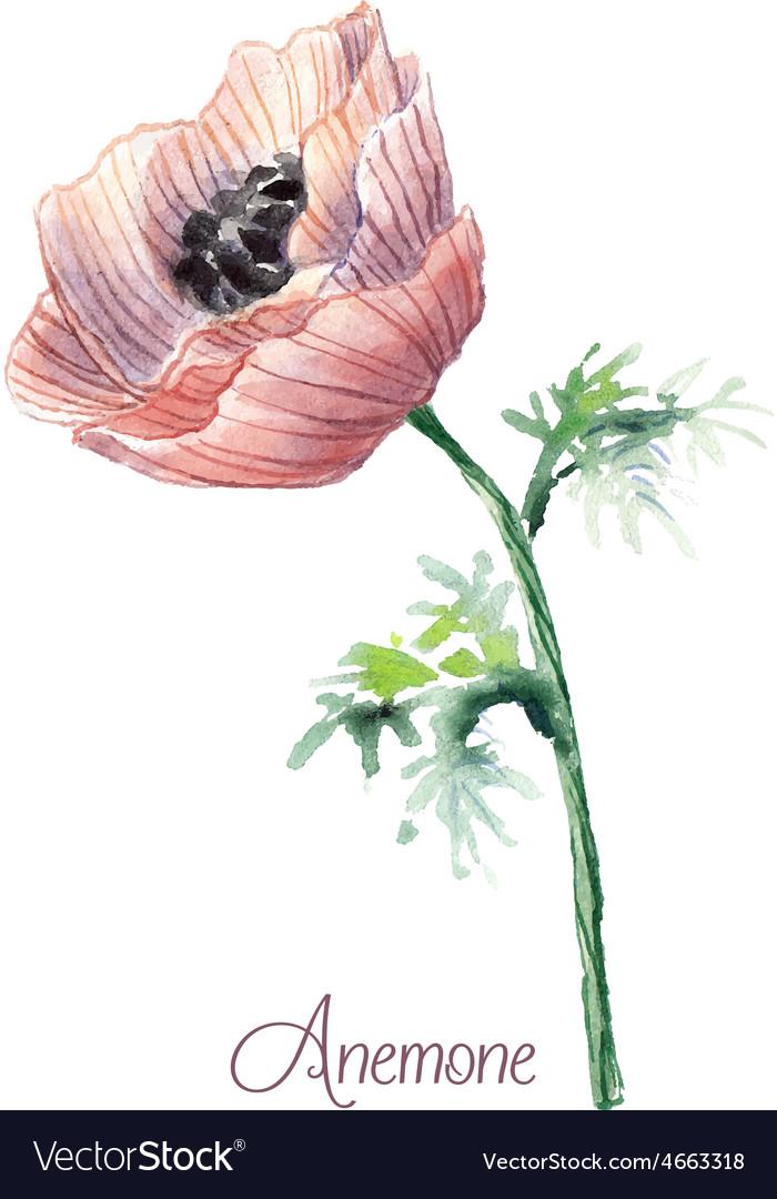 Delicate watercolor anemone vector | Price: 1 Credit (USD $1)