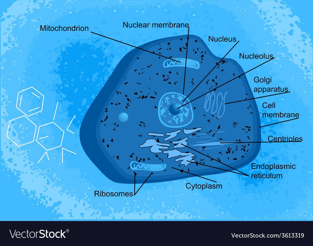 Animal cells vector | Price: 1 Credit (USD $1)