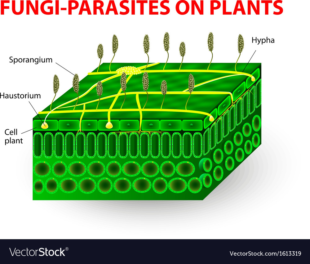 Fungi parasites on plants vector | Price: 1 Credit (USD $1)