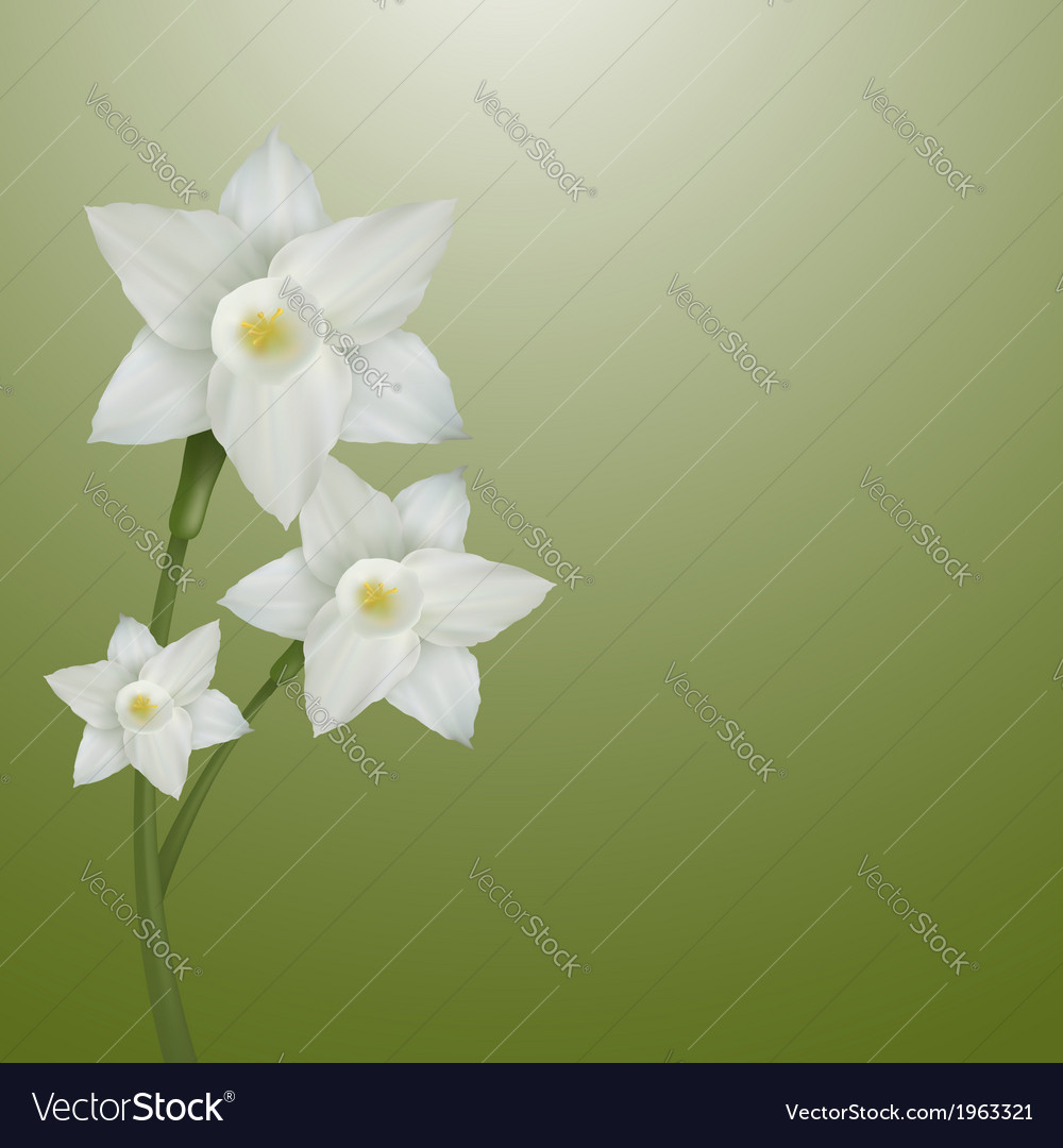 Flower narcissus vector | Price: 1 Credit (USD $1)