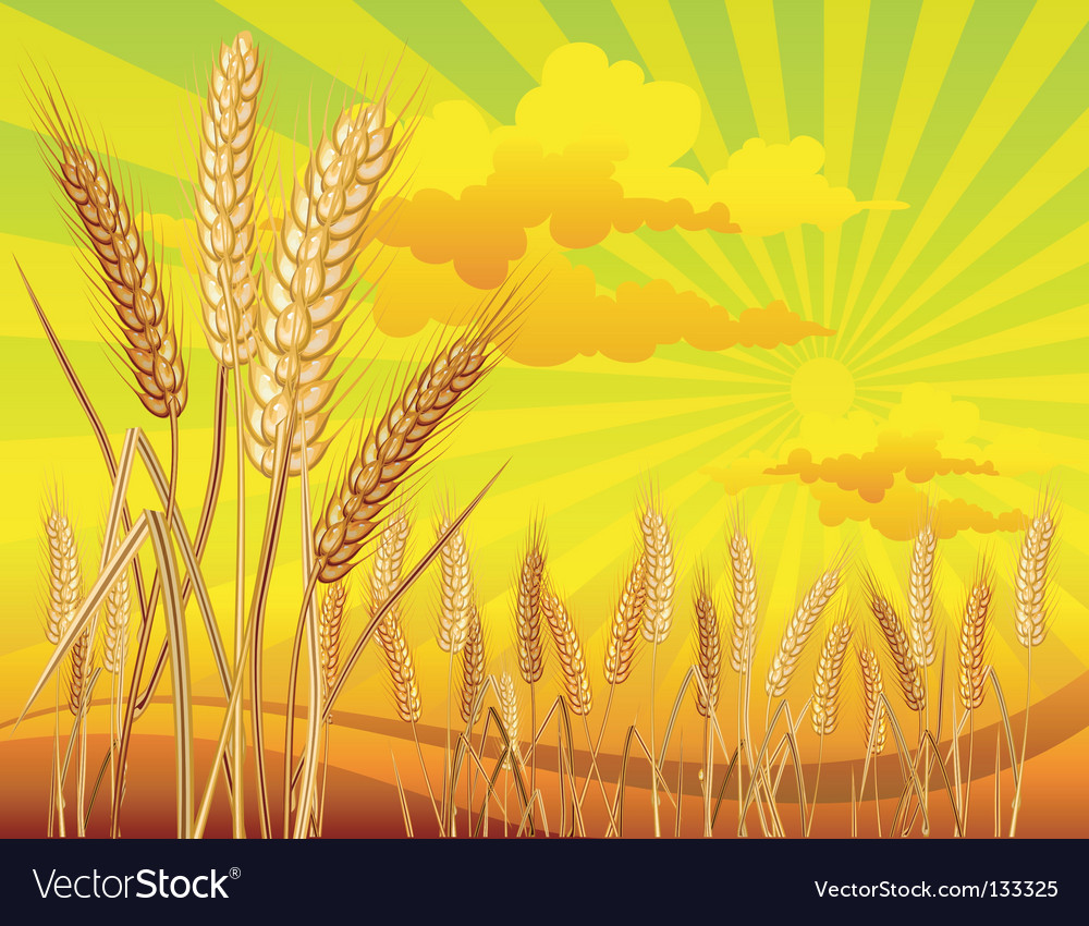Landscape with wheat vector | Price: 1 Credit (USD $1)