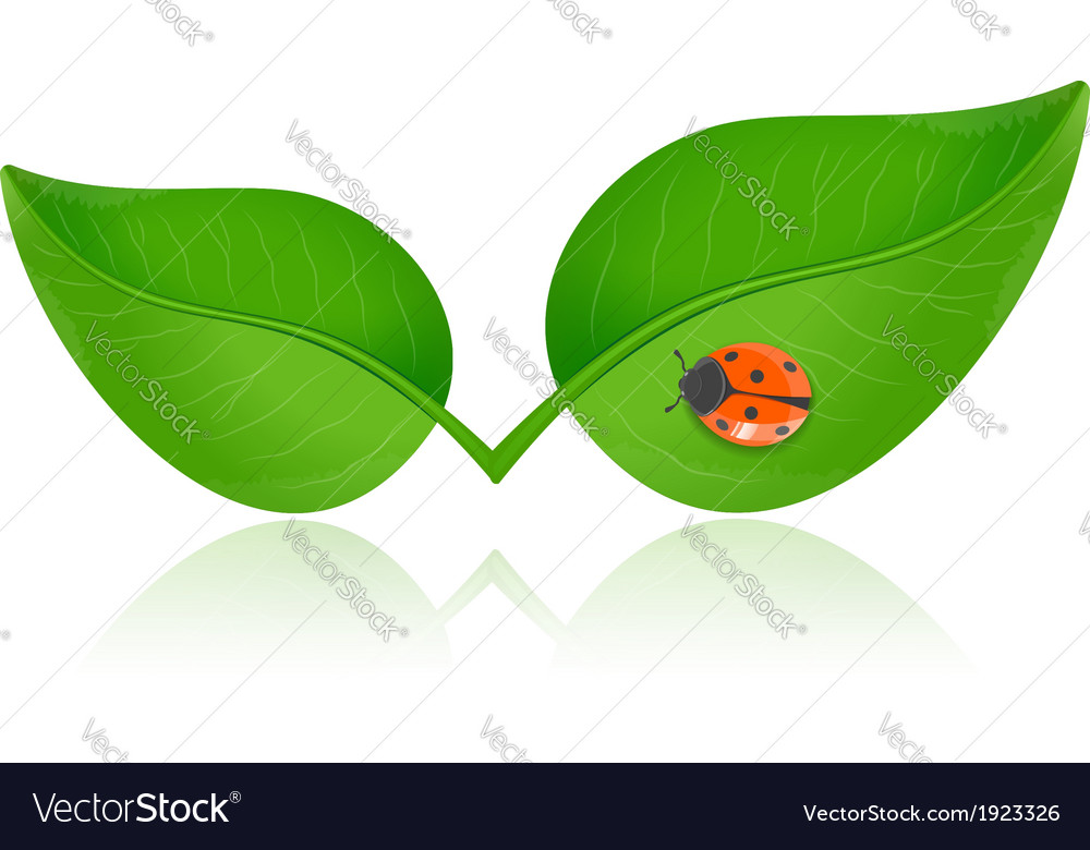 Green leaf with ladybird vector | Price: 1 Credit (USD $1)