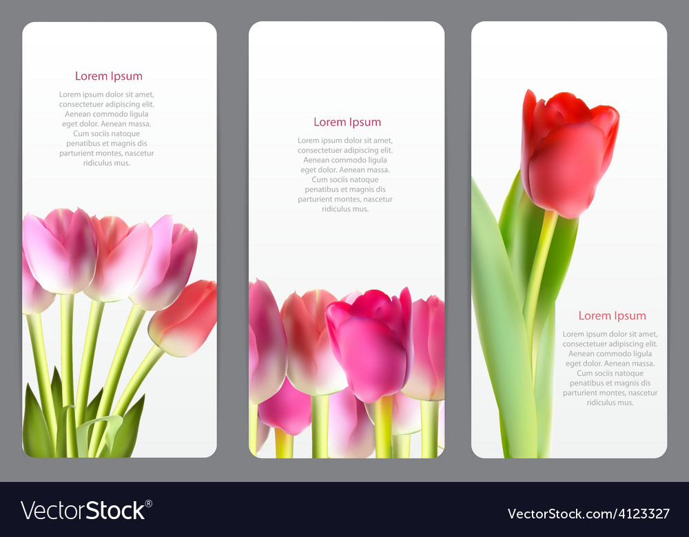 Beautiful floral cards with realistic tulip vector | Price: 1 Credit (USD $1)