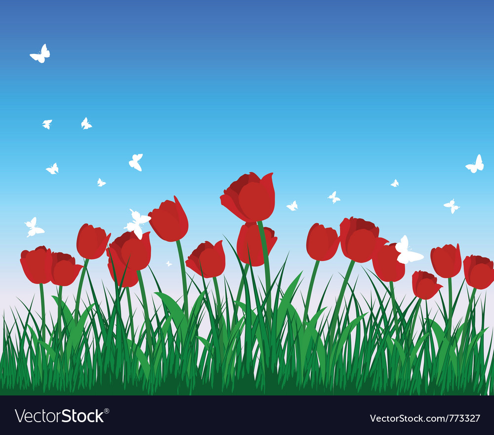 Tulip field vector | Price: 1 Credit (USD $1)