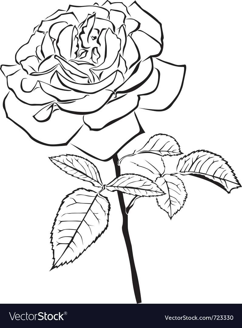 Large rose vector | Price: 1 Credit (USD $1)