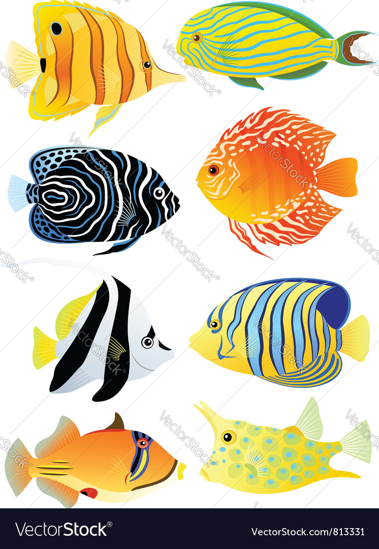 Collection of tropical fish vector | Price: 3 Credit (USD $3)