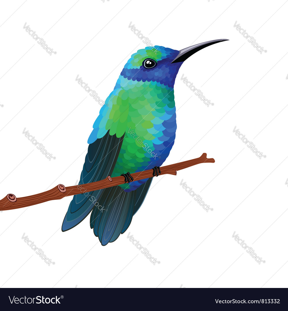 Hummingbird vector | Price: 3 Credit (USD $3)