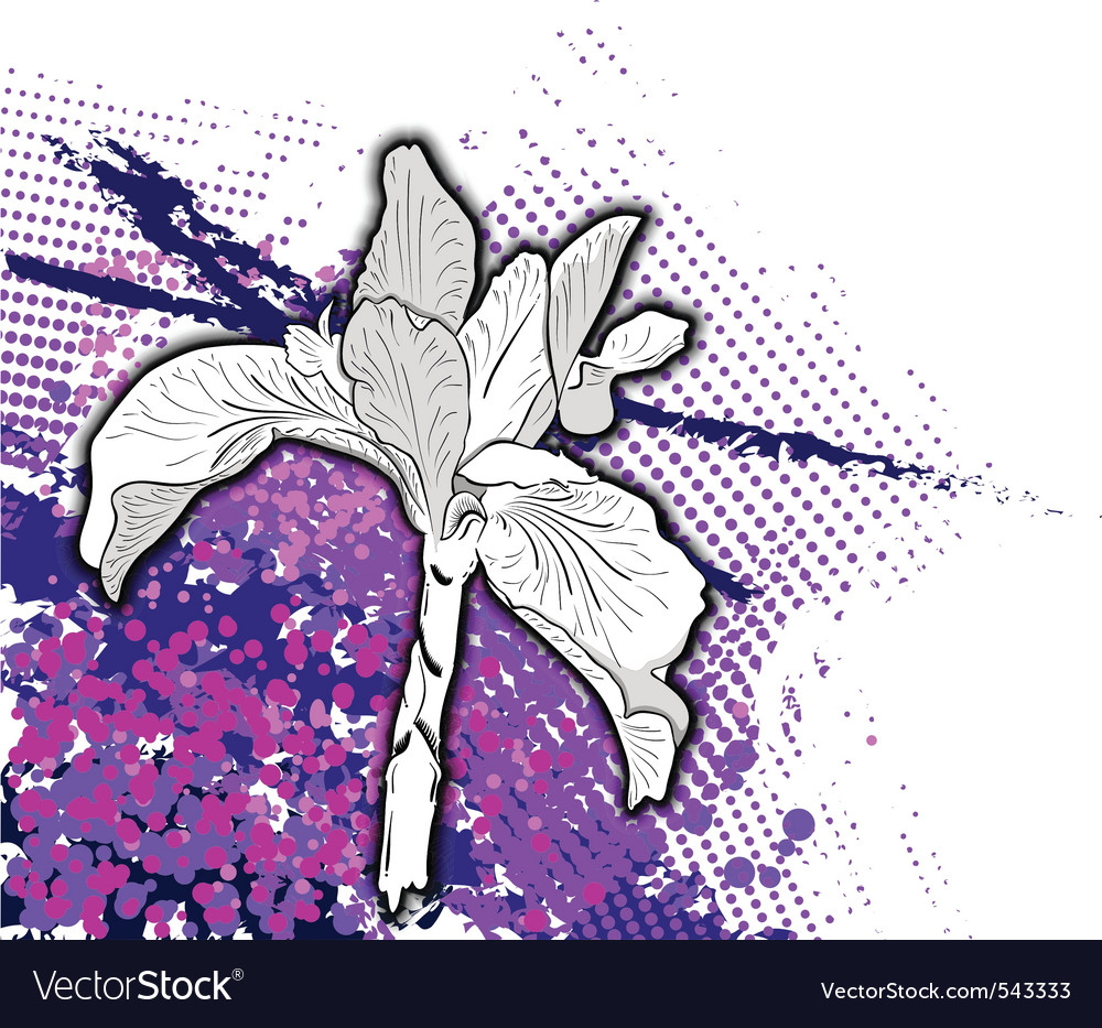 Iris drawing vector | Price: 1 Credit (USD $1)