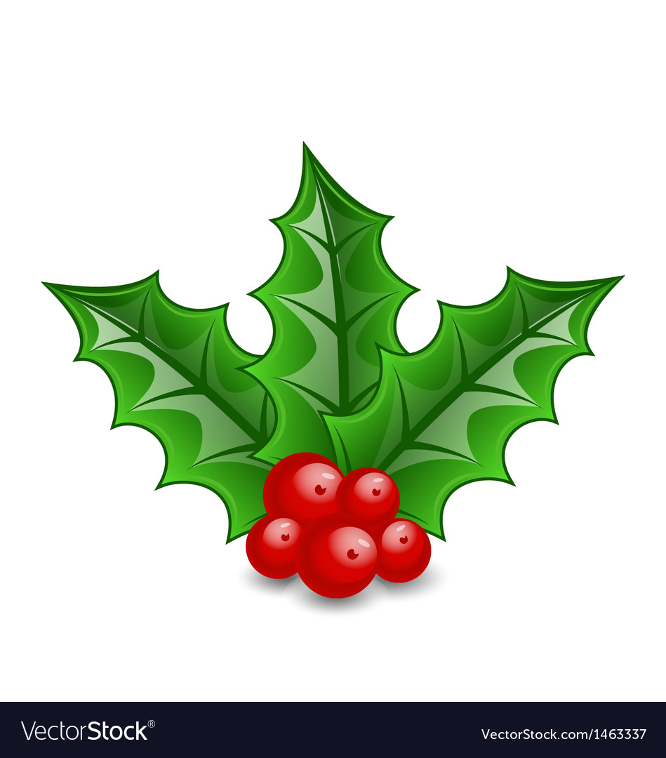 Christmas decoration holly berry branches isolated vector | Price: 1 Credit (USD $1)