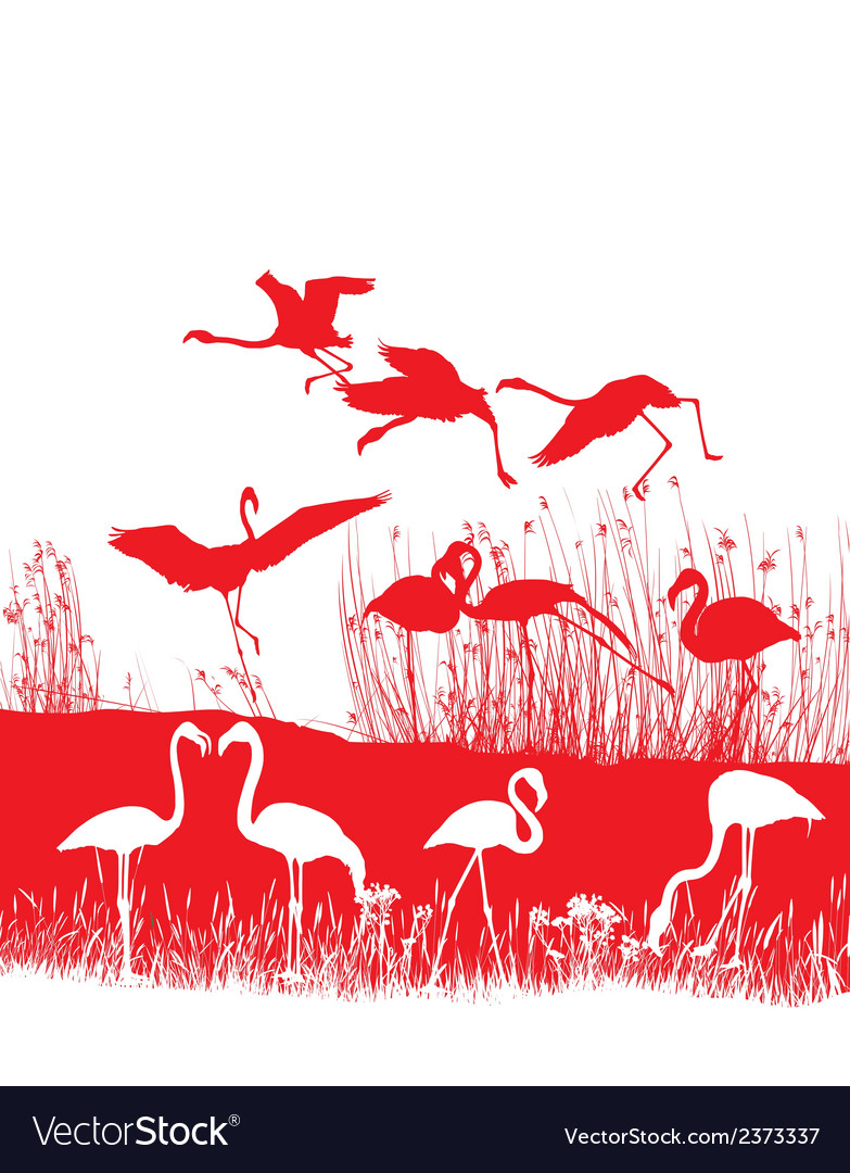 Red flamingos on the shore vector | Price: 1 Credit (USD $1)