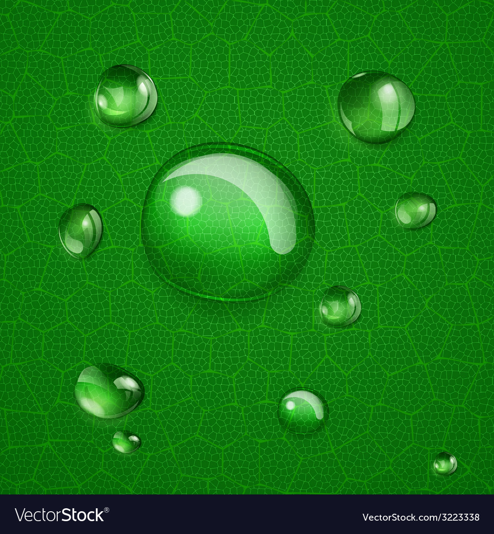 Background with drops on green leaf vector | Price: 1 Credit (USD $1)