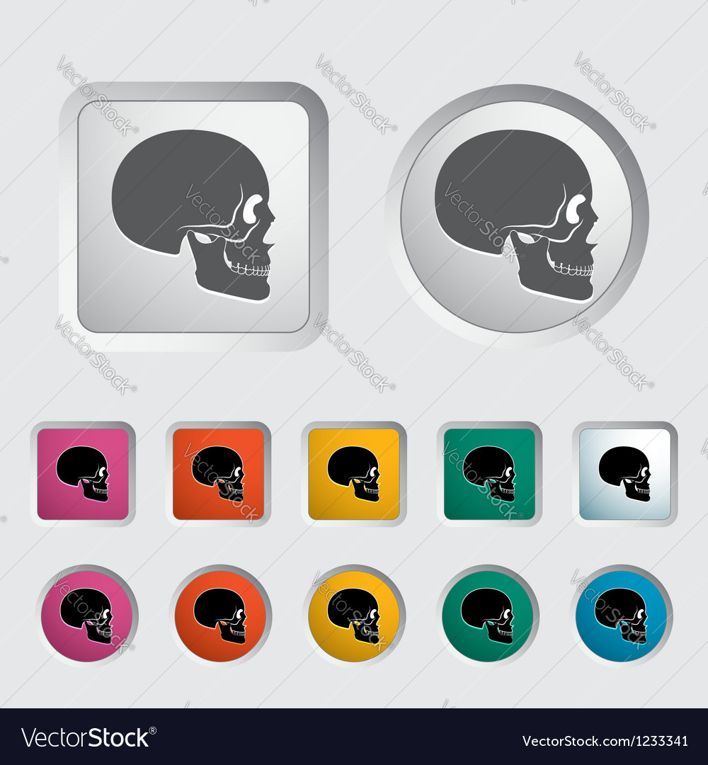 Anatomy skull vector | Price: 1 Credit (USD $1)