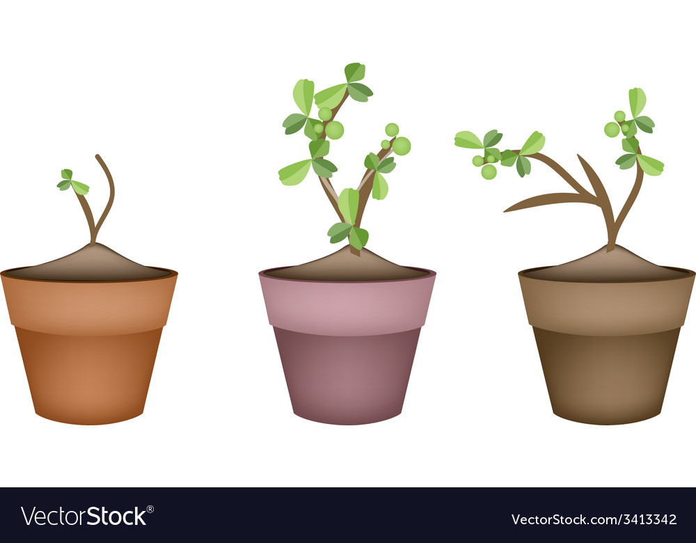 Bonsai trees and green plants in ceramic pots vector | Price: 1 Credit (USD $1)