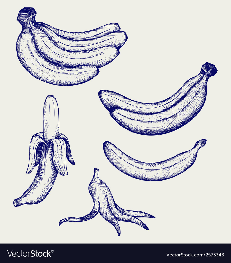 Bunch of bananas peeled banana and banana peel vector | Price: 1 Credit (USD $1)