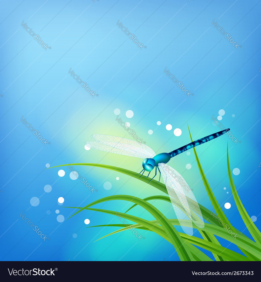 Dragonfly on grass blade vector | Price: 1 Credit (USD $1)