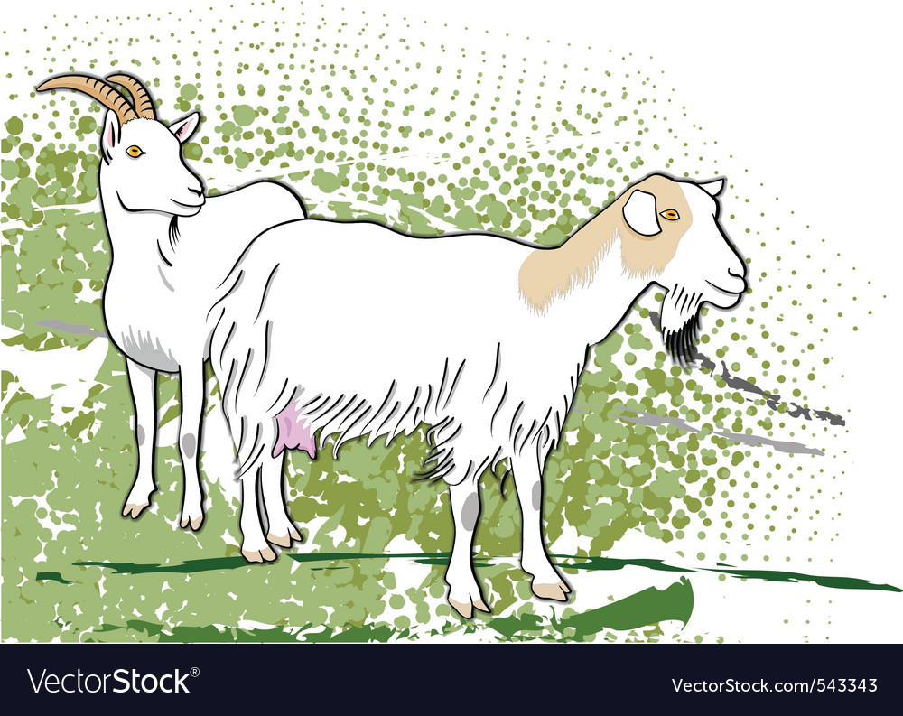 Goats vector | Price: 1 Credit (USD $1)
