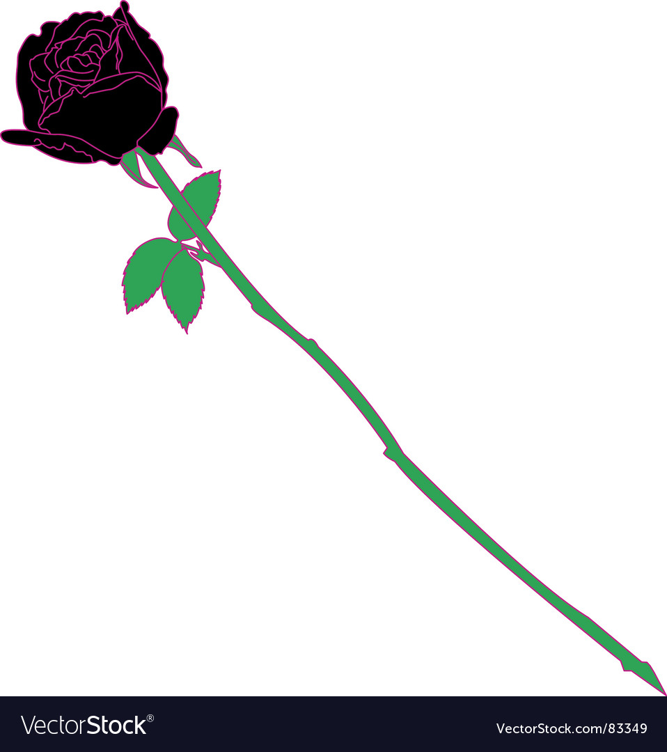 Black rose vector | Price: 1 Credit (USD $1)