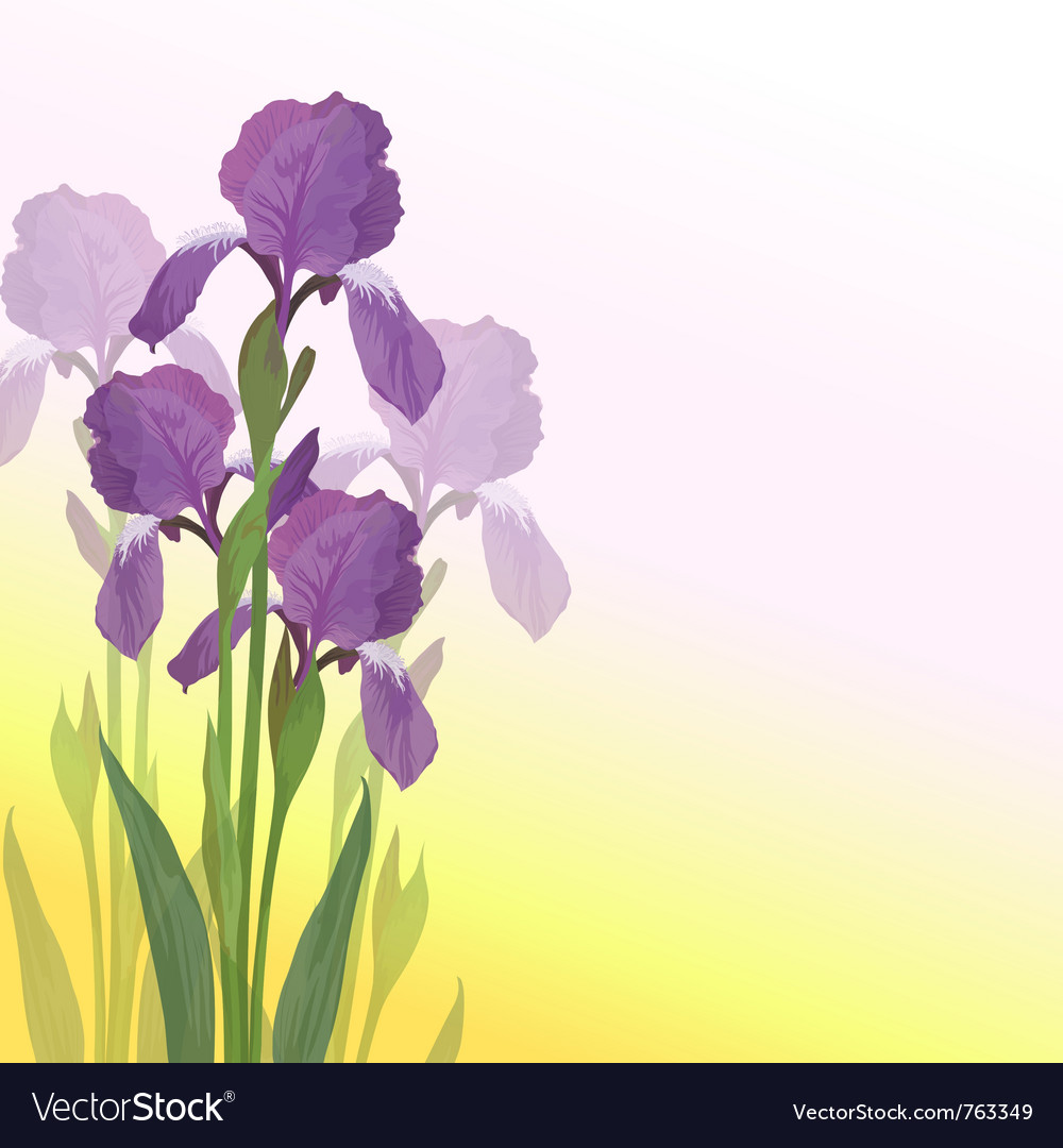 Flowers iris vector | Price: 1 Credit (USD $1)