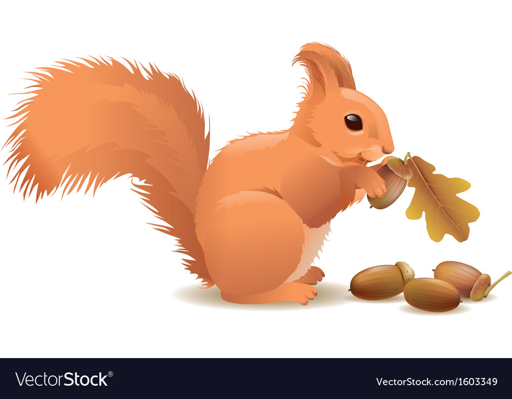 Squirrel with acorns vector
