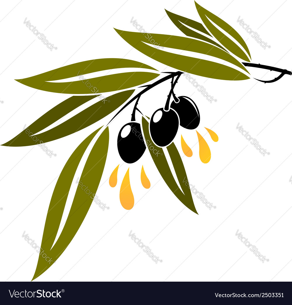 Black olives on a branch dripping olive oil vector | Price: 1 Credit (USD $1)