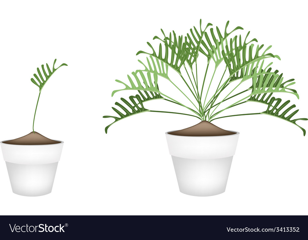 Two philodendron plant in ceramic flower pots vector | Price: 1 Credit (USD $1)